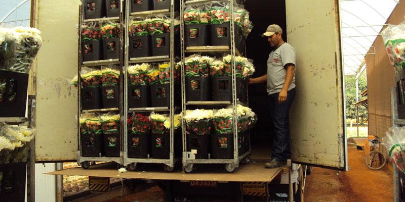 Transtim Transporte de flores e plantas