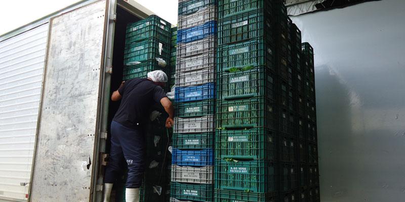 Transtim Transporte de hortaliças